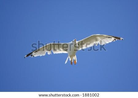 White bird against blue sky