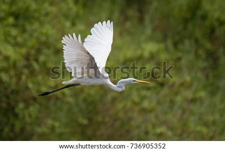 White bird flying . #736905352