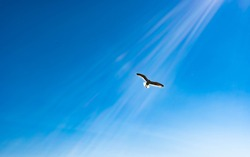 White bird flying in sun rays against dark blue sky. Symbol of peace and hope to let us know that God is looking after us