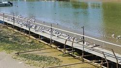 White birds on the pier in the port of Pesaro (Pesaro, Italy, Europe)