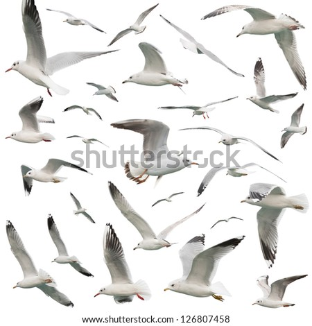 white birds set. isolated on white