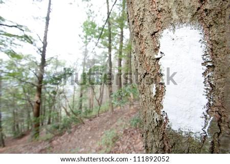 White blaze on the Appalachian trail. Pennsylvania