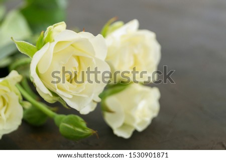 white blooming roses on a dark background. #1530901871