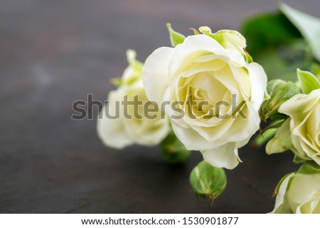 white blooming roses on a dark background. #1530901877