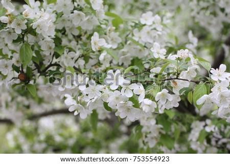 White blossom flowers in early spring ez canvas white blossom flowers in early spring mightylinksfo