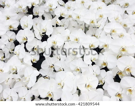 white branch orchid flowers ...