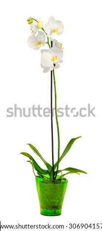 white branch orchid  flowers...