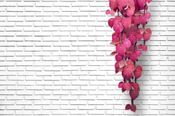 White brick wall background with pink creeping plant