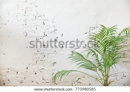 White brick wall with coconut palm leaf ?Background.