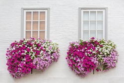 White brick wall with windows and flowers in flower boxes