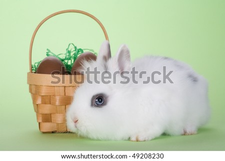 stock-photo-white-bunny-with-chocolate-easter-eggs-isolated-on-green-background-49208230.jpg