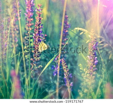 White butterfly on wild flower (purple flower)