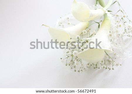 White calla lilies, isolated on white.