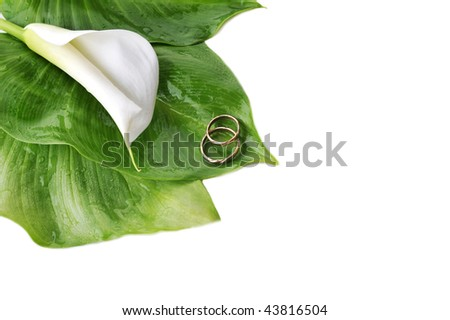 stock photo white calla lily and wedding rings on green leaves close up