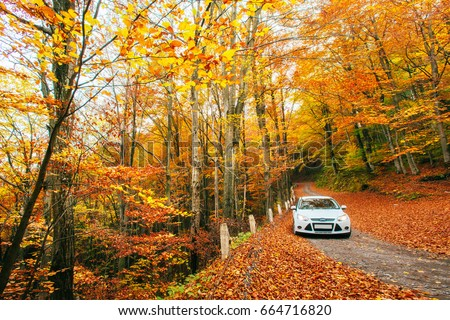 White car on a forest trail. Golden autumn. #664716820