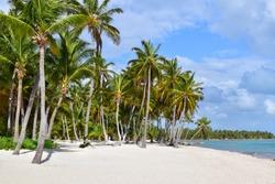 White Caribbean Beach Palmtrees Punta Cana