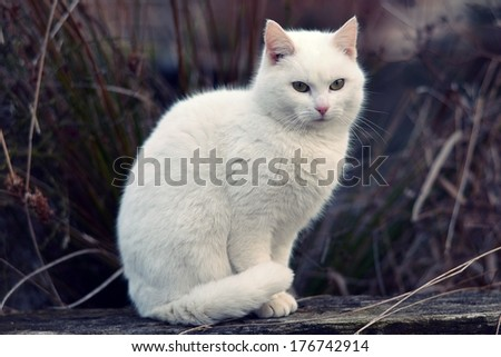 Stock Photo White cat