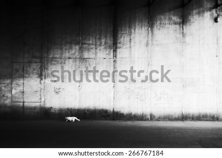 White cat against wall. Homeless cat, street animal. Texture of concrete wall. City street. Black and white photo