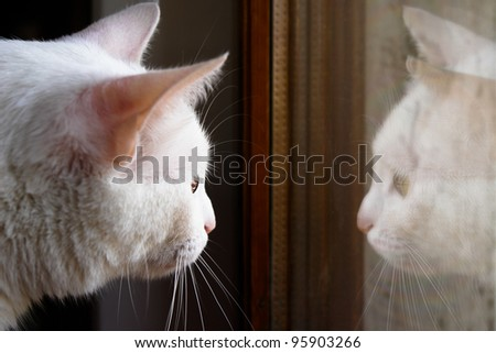 white cat and its reflection on window