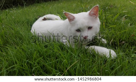 White cat,big cat, sadnesses, lay down. #1452986804