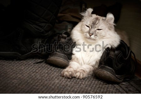 White cat drowsing on the carpet between shoes