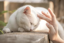 white cat feeling good when playing with human, select focus cat eye