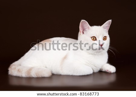White cat head on brown background