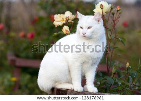 White cat in garden with roses