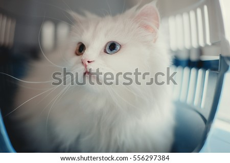 white cat in plastic carrying / inside the box
