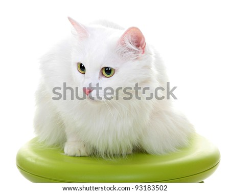 White cat isolated on a white background