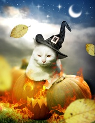 White cat laying down on halloween pumpkin decorated with fire and autumn leaves