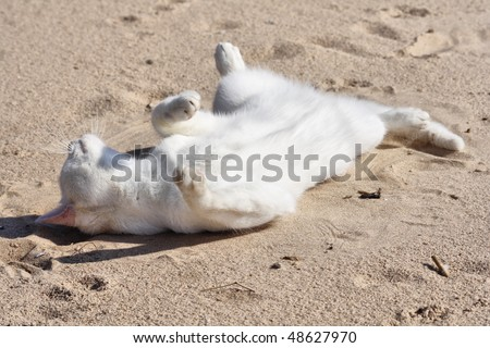 White cat lies on sand up a stomach