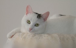 White cat looking ingenuously to the viewer