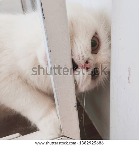 White cat looking me pic