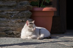 White cat lying down on the stone and enjoying sun with her eyes closed