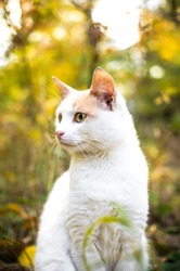 White cat on a background of bright foliage vertical photo on wallpaper