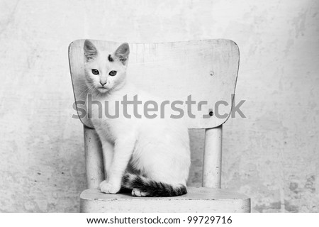 white cat on a chair