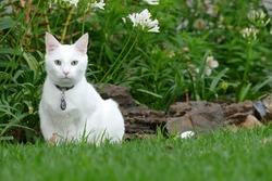 White cat on grass