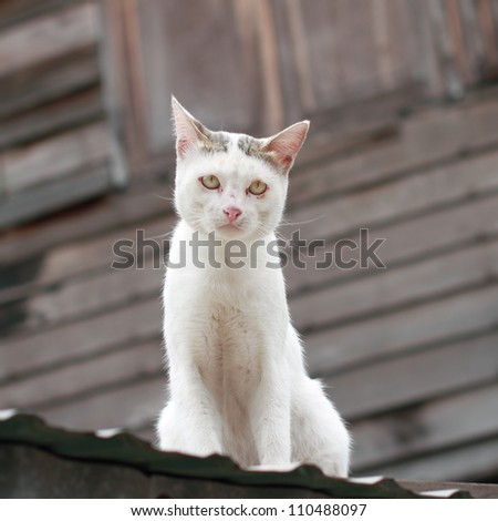 white cat on roof