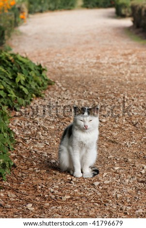 White cat on the path