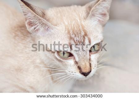 White cat on white background.
