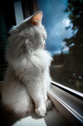 white cat sit by the window at late night