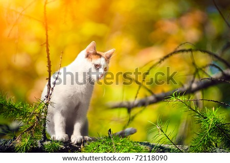 White cat sits high on a tree in the morning