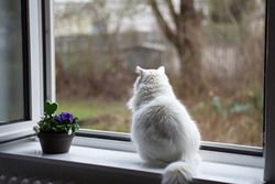 White cat sitting at the window