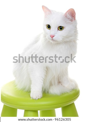 white cat sitting on a green stool. Vertical shooting. Isolated on a white background.