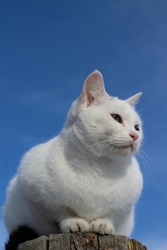 White Cat Sitting on Wooden Fence Post against Blue Sky