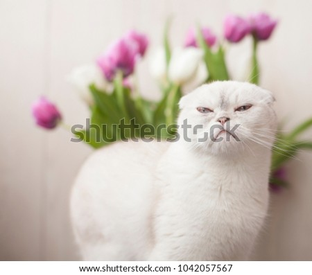 White cat sitting with flower on a window in living room #1042057567