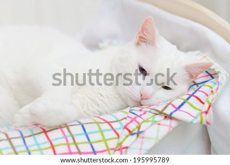 White cat sleeping in small bed.