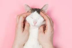 White cat striped on a pink background, funny cat