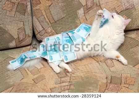 white cat under money on sofa